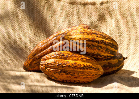 Theobroma cacao on burlap