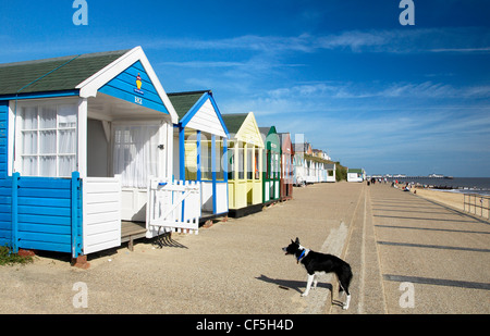 Beach huts and a dog on Southwold promenade. - Stock Photo
