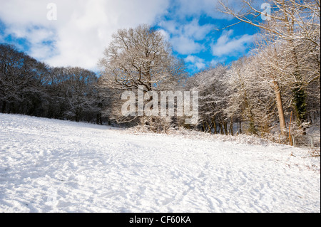 Snow covering the ground in Thorndon Country Park. - Stock Photo