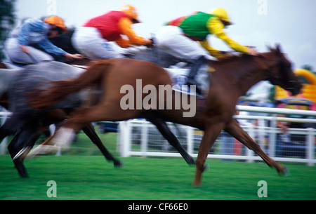 Horse racing at Leicester Racecourse. Stock Photo