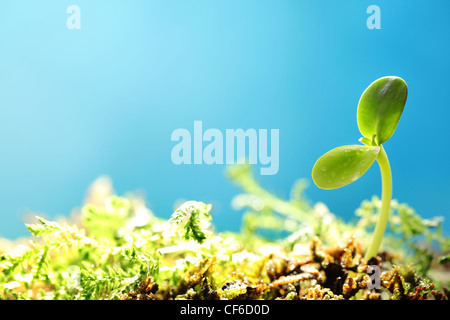 Spring sprout on blue background