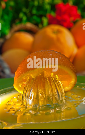 Orange juicer with freshly squeezed juice and basket of oranges in sunny alfresco garden terrace situation - Stock Photo