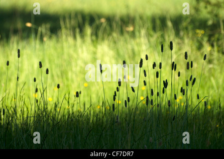 Grass in a pastures at Northern Portugal - Stock Photo