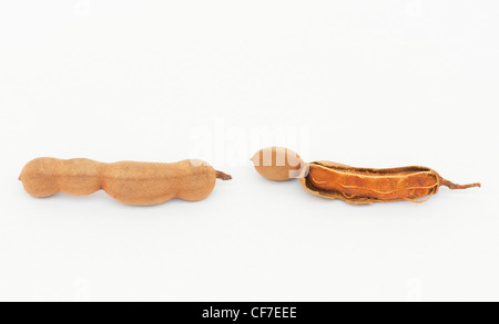Tamarindus indica . Tamarind fruit / seed pods on white background - Stock Photo