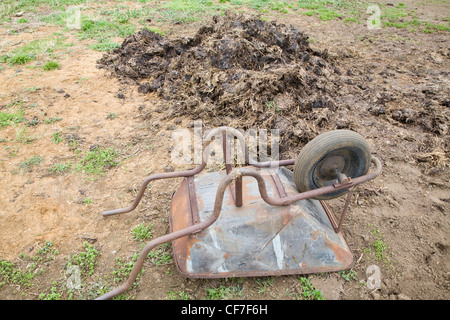 Metal wheelbarrow and pile of dung manure - Stock Photo