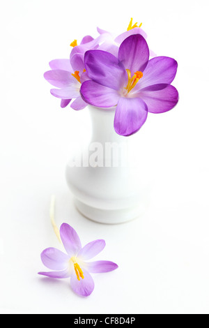 Violet crocus in vase for spring on white background - Stock Photo