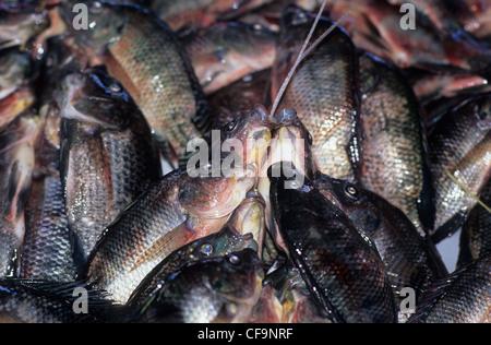 Suva fish market suva fiji stock photo royalty free for Pacific fish market
