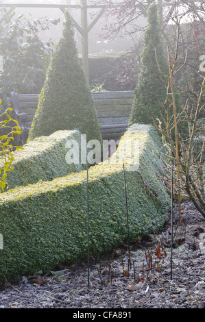 Box hedging and conical topiary leading to a garden seat in a garden on a frosty morning, January - Stock Photo