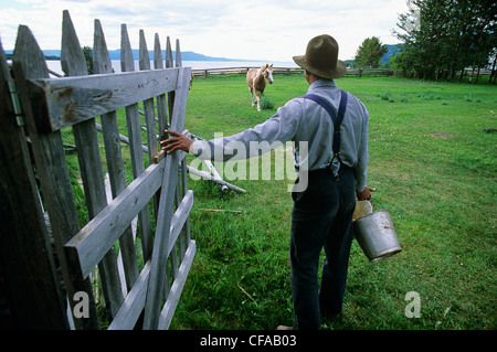 Man feeds horses fort st james national historic - Stock Photo