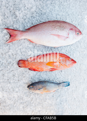 Varieties of fish on ice bed - Stock Photo