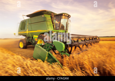 motion study of a combine harvesting spring wheat, near Somerset, Manitoba, Canada. - Stock Photo