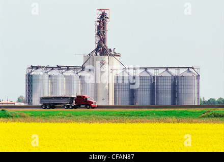 Blooming canola field with transport truck and inland grain terminal in the background, near Winnipeg, Manitoba, - Stock Photo
