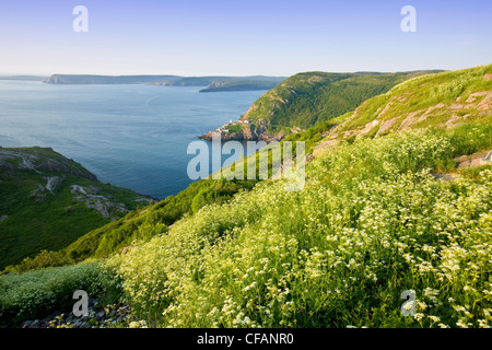 View from Signal Hill National Historic Site, St. John's, Newfoundland and Labrador, Canada. - Stock Photo