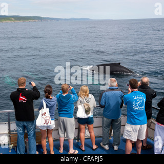 Whale watchers viewing Humpback Whale - Stock Photo