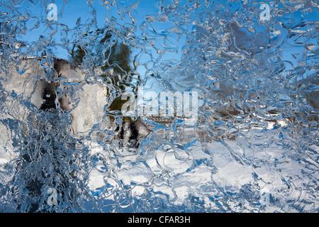 thin sheet of ice - Stock Photo