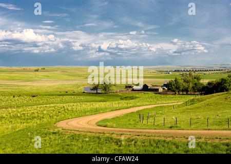 Horses on a ranch near Brooks, Alberta, Canada. - Stock Photo