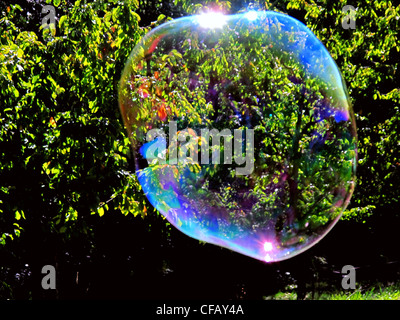 Soap bubble, bubble, reflection, bushes, thicket, sunrays, reflection, float - Stock Photo