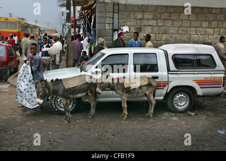 Donkeys lined up next to a car on a street in addis ababa - Stock Photo
