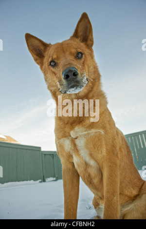 Portrait of mixed breed dog outdoors in winter - Stock Photo