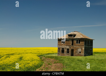 Abandoned farmhouse and canola field near Leader, Saskatchewan, Canada - Stock Photo