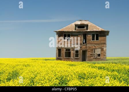 Abandoned house and canola field near Leader, Saskatchewan, Canada - Stock Photo