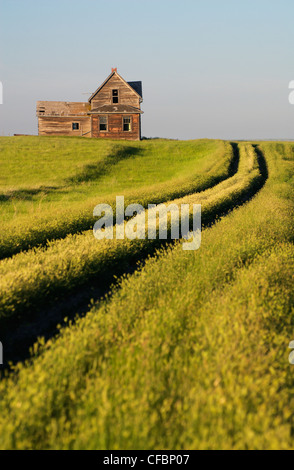 Abandoned house near Leader, Saskatchewan, Canada - Stock Photo