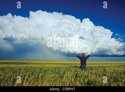 A farmer looks out over a barley field with a cumulonimbus cloud mass in the background near Bromhead, Saskatchewan, - Stock Photo
