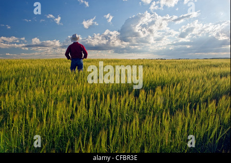 A man looks out over a barley crop and a sky with developing cumulonimbus clouds, Tiger Hills, Manitoba, Canada - Stock Photo