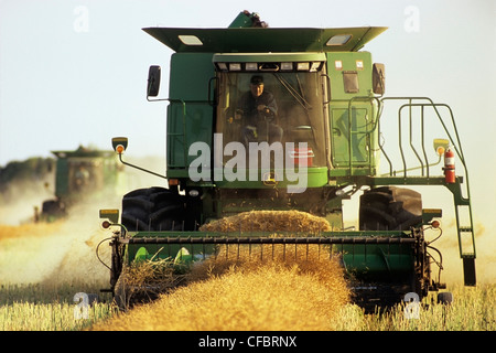 two combine harvesters work in a canola field, near Dugald, Manitoba, Canada - Stock Photo