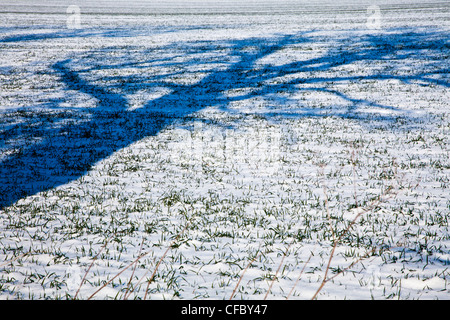 An abstract minimalist image of the shadow cast by a tree onto a snow covered field - Stock Photo
