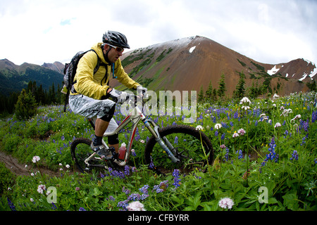 Chilco mountain biking Lick Creek, British Columbia, Canada - Stock Photo
