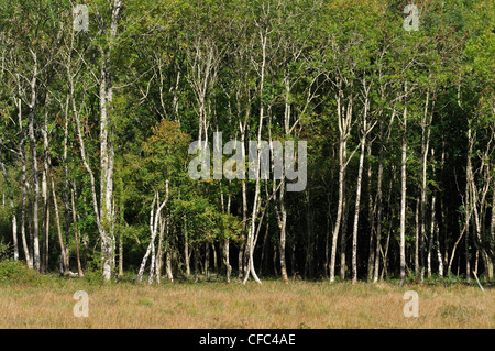 A view of Bracketts Coppice Dorset Wildlife Trust Reserve UK - Stock Photo