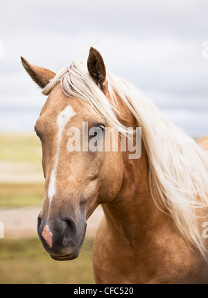 Close up portrait of a horse on the Canadian Prairie. Big Muddy Badlands, Saskatchewan, Canada. - Stock Photo