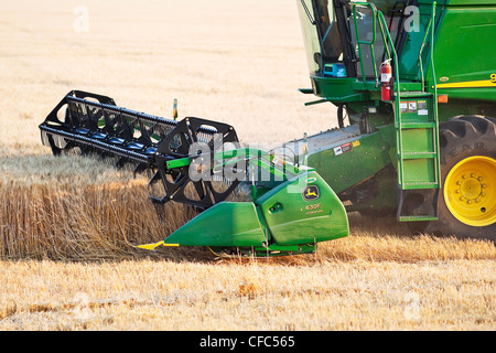 Combine harvesting wheat crop on Canadian Prairie, close up view. Near Winkler, Manitoba, Canada. - Stock Photo