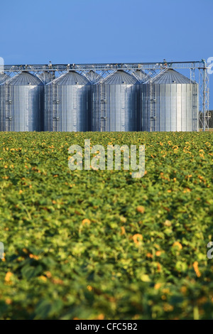 Inland Grain Terminal and sunflower field in the foreground. Rathwell, Manitoba, Canada. - Stock Photo