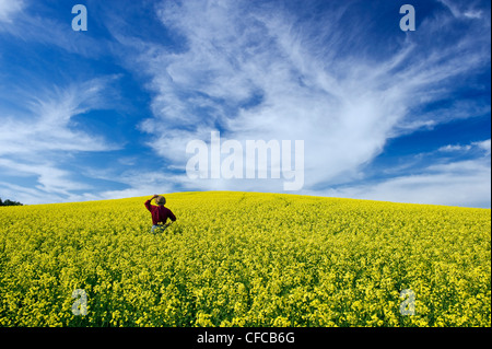 a man looks out over a field of bloom stage canola and a sky filled with cirrus clouds, Tiger Hills, Manitoba, Canada - Stock Photo