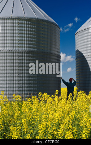 a man looks out over a field of bloom stage canola with grain bins(silos) in the background, Tiger Hills, Manitoba, - Stock Photo