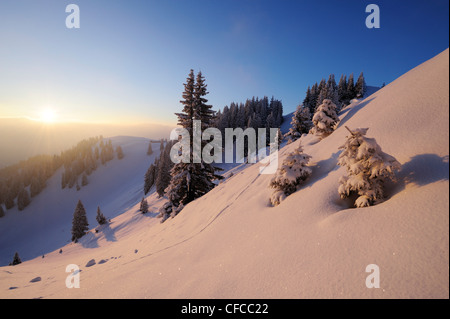 Snow covered spruces and slopes, Wallberg, Bavarian alps, Upper Bavaria, Bavaria, Germany, Europe - Stock Photo