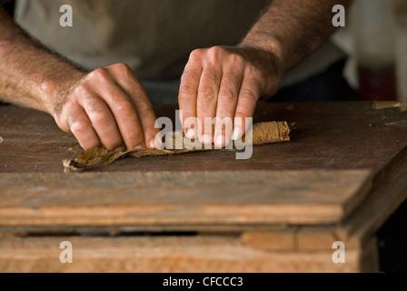 Rolling cigars in Vinales Cuba