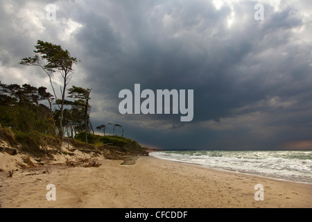 Thunderclouds over Darss west beach, Fischland-Darss-Zingst, Baltic Sea, Mecklenburg-West Pomerania, Germany