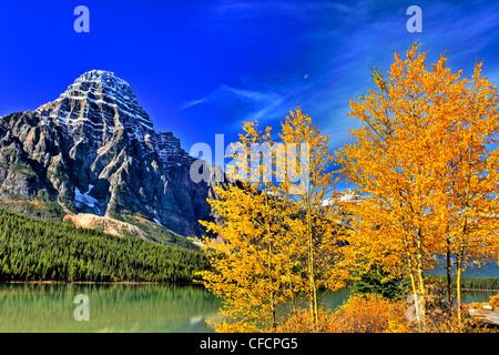 Mt Chephren and Aspens, Waterfowl Lake, Banff National Park, Alberta, Canada - Stock Photo