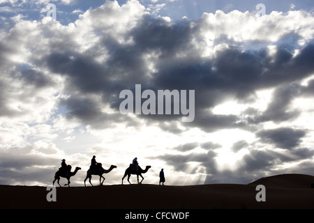 Silhouette of Berber man leading,camels along the ridge of a sand dune in the Erg Chebbi sand sea near Merzouga, - Stock Photo
