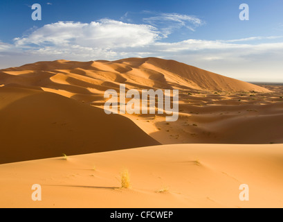 Rolling orange sand dunes and sand ripples in the Erg Chebbi sand sea near Merzouga, Morocco, North Africa, Africa - Stock Photo
