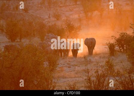Elephants, Hwange National Park, Zimbabwe, Africa - Stock Photo