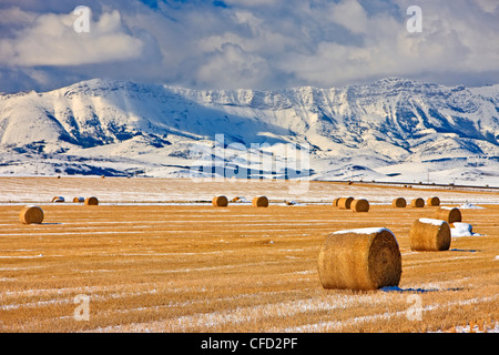 Hay bales covered in snow backdropped by snowcovered mountains in Southern Alberta, Canada. - Stock Photo