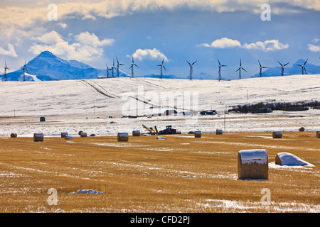 Hay bales covered in snow in Cowley backdropped by snowcovered mountains and windmills in Southern Alberta, Canada. - Stock Photo
