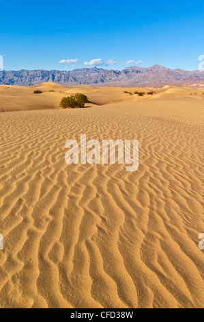 Sand ripples, Stovepipe Wells, Death Valley National Park, California, USA