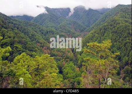 Rain forest of Parque Nacional Montana de Celaque, Gracias, Honduras, Central America - Stock Photo