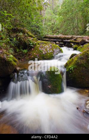 River in Parque Nacional Montana de Celaque, Gracias, Honduras, Central America - Stock Photo