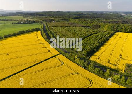 Aerial view of flowering canola field, Eifel, Rhineland Palatinate, Germany, Europe - Stock Photo